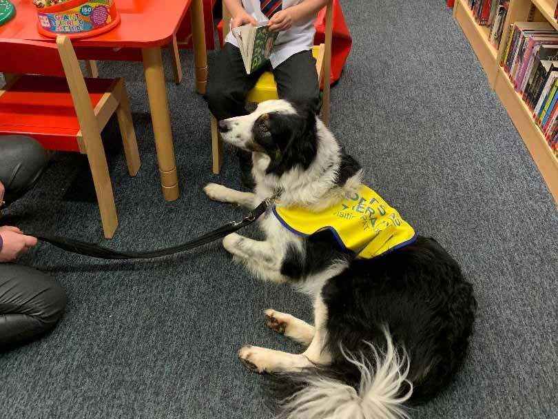 Read to Teddy the border collie